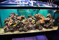 agar aquarium tetap bersih dan tidak amis