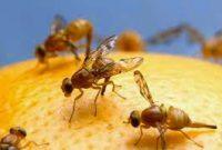cara praktis mengusir lalat
