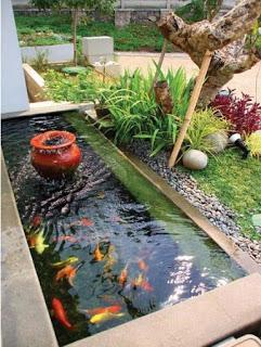 cara praktis membuat kolam ikan di rumah mungil minimalis