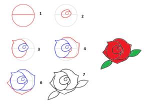 cara menggambar bunga mawar dalam 7 langkah mudah