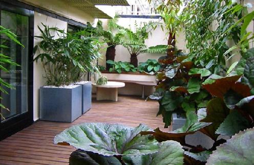 tips memilih tanaman untuk desain taman rumah minimalis