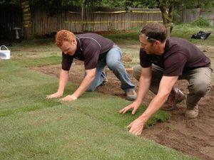 cara menanam rumput alami