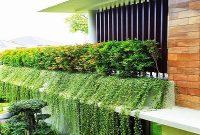 cara menanam tanaman rambat lee kuan yew